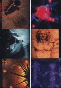 Эволюция человека. Книга 2